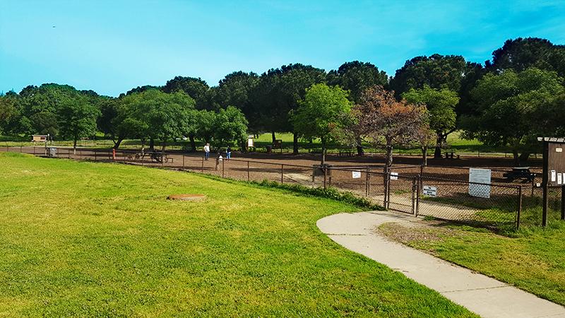 The fenced dog park