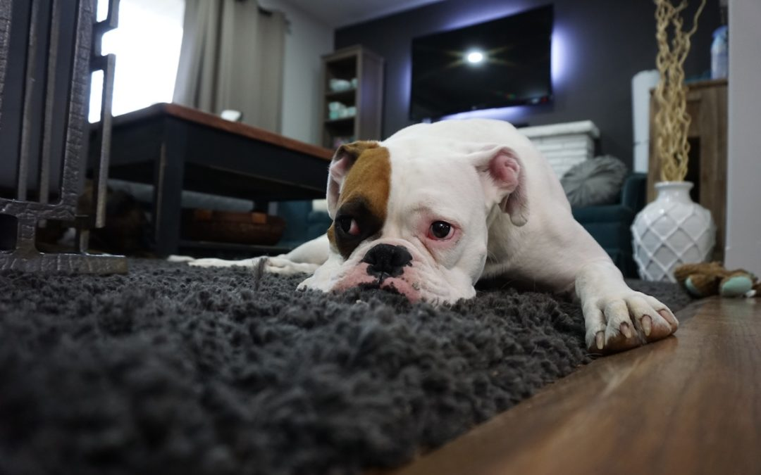 If My Dog Bites Someone, is it Covered on My Homeowner's Insurance?